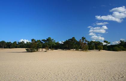 Door de duinen zie je het bos juist wel